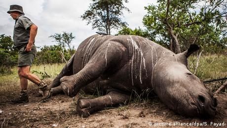 Rhino poaching figures decreased for a sixth straight year in South Africa