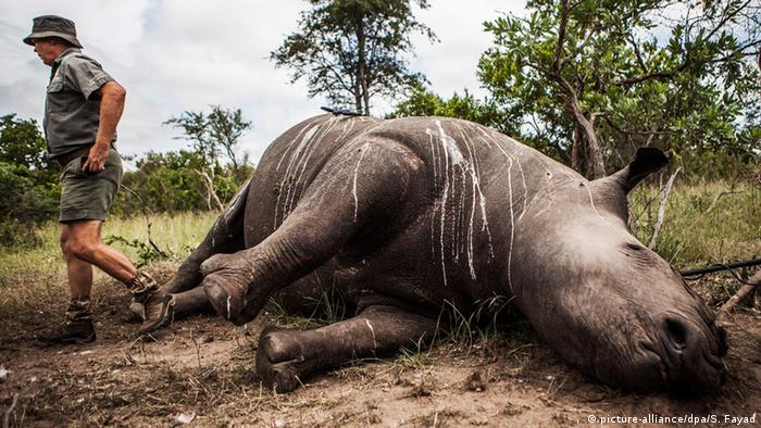 Dead rhinoceros in African park (picture-alliance/dpa/S. Fayad)