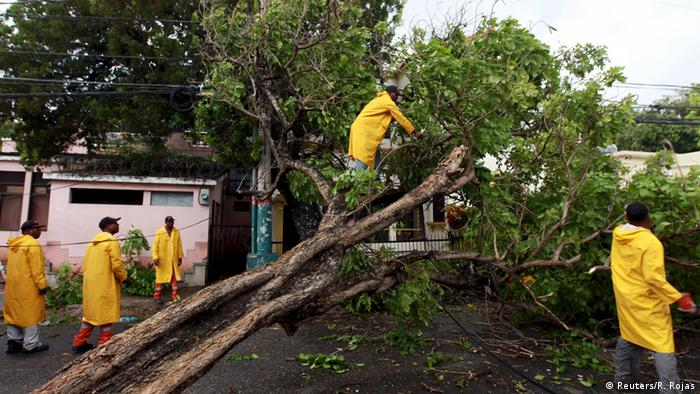 Fallen trees being tended to by helpers in yellow coats in Dominican Republic REUTERS/Ricardo Rojas