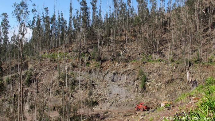 از هنگام شروع تمدن بشری بر کره خاکی شمار درختان نصف شده است