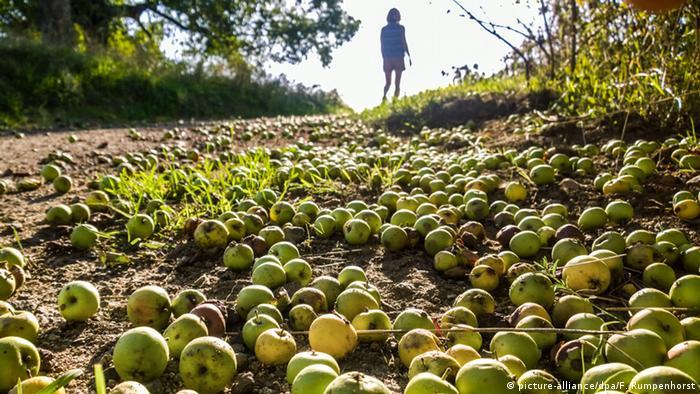 Deutschland BdT Fallobst Äpfel in Frankfurt am Main