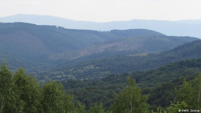 Як зупинити незаконну вирубку лісу на Закарпатті