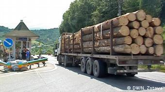В 2017 году активисты зафиксировали рекордное количество вывозимого из Украины леса-кругляка