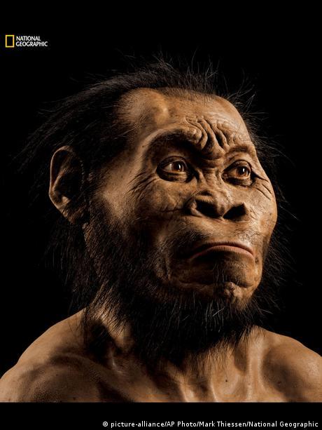 """O que o """"Homo naledi"""" pode dizer sobre a evolução humana?"""