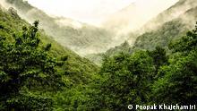 Iran Wald