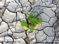 Plant in drought-riven soil