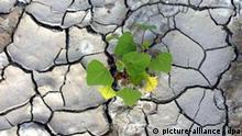 Dürre auf Sizilien