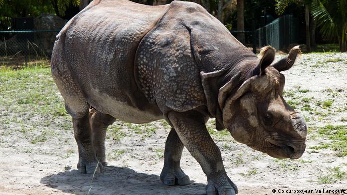 Javan rhinoceros (Colourbox/Jean Vaillancourt)