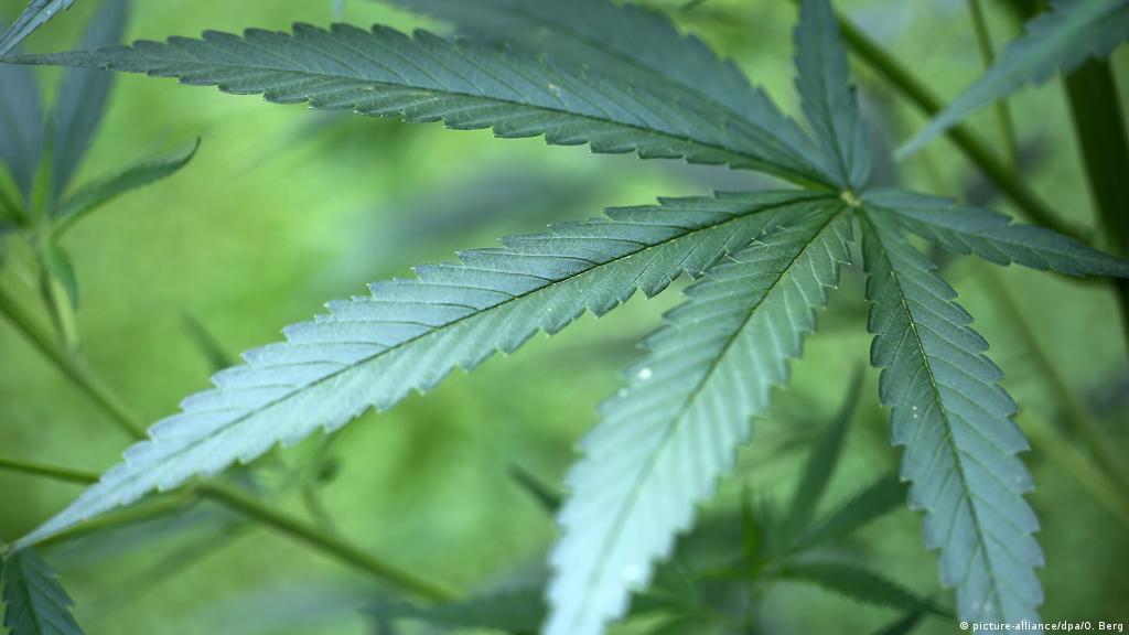Марихуана при рассеянном склерозе старая песня марихуана