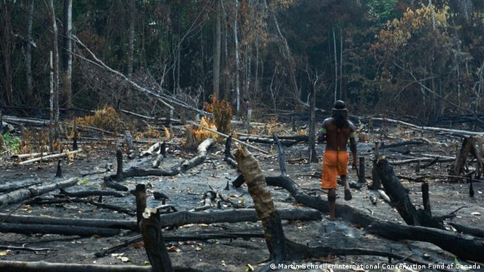 Photo: Kayapó on a destroyed patch of forest (Source: International Conservation Fund of Canada)