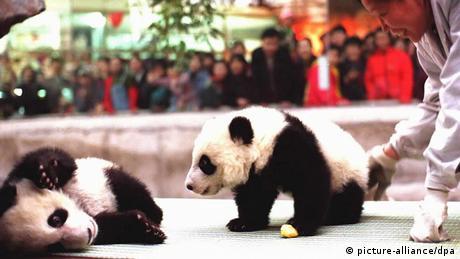 China Zoo Peking Pandabär Zwillinge