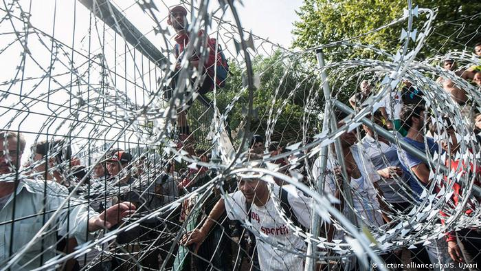 Razor wire fence on Hungarian border with Serbia