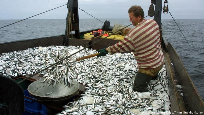 ловля рыбы завод