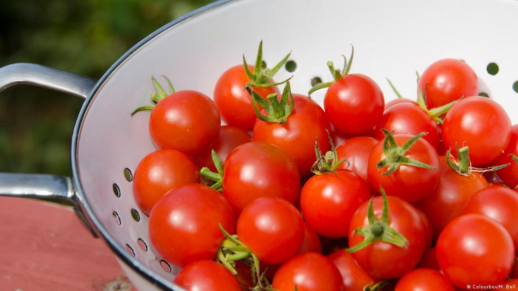 الطماطم المطبوخة صحية ومفيدة أكثر من الطازجة منوعات نافذة Dw عربية على حياة المشاهير والأحداث الطريفة Dw 31 05 2016