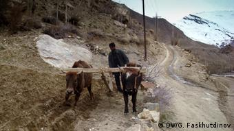 Житель Горного Бадахшана на мулах вспахивает землю