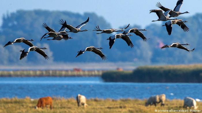 BdT Deutschland Herbstlicher Kranichzug an der Ostseeküste