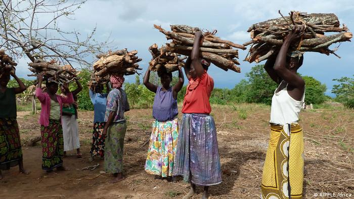 Women in Malawi carry wood for cooking on their heads