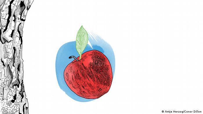 Der Apfel fällt nicht weit vom Stamm Illustrationen Kultur DW exclusiv Projekt Sprichwörter