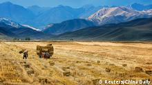 A farmer harvests in a crop field in Yili, Xinjiang Autonomous Region, October 3, 2015. The world's largest makers of tractors and combines are finding a rare opportunity for growth in China despite a sharp slowdown in the world's No. 2 economy, with big farm machines in demand as the rural labor force shrinks and plot sizes grow. Picture taken October 3, 2015. REUTERS/China Daily CHINA OUT. NO COMMERCIAL OR EDITORIAL SALES IN CHINA TPX IMAGES OF THE DAY