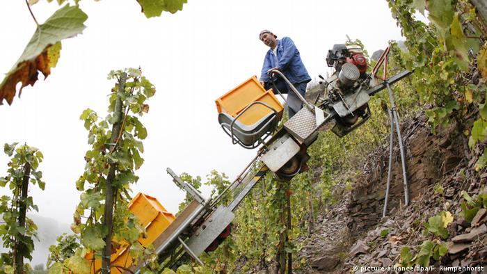 Bildergalerie Weinlandschaften in Deutschland - Mosel Bremmer Calmont