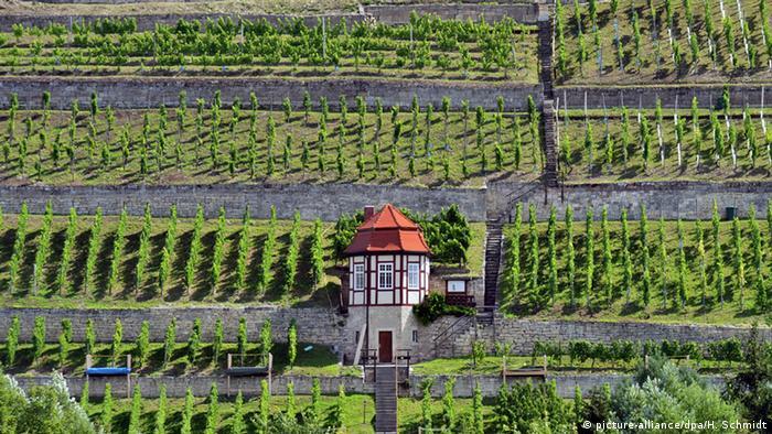 Bildergalerie Weinlandschaften in Deutschland - Weinberge an der Unstrut