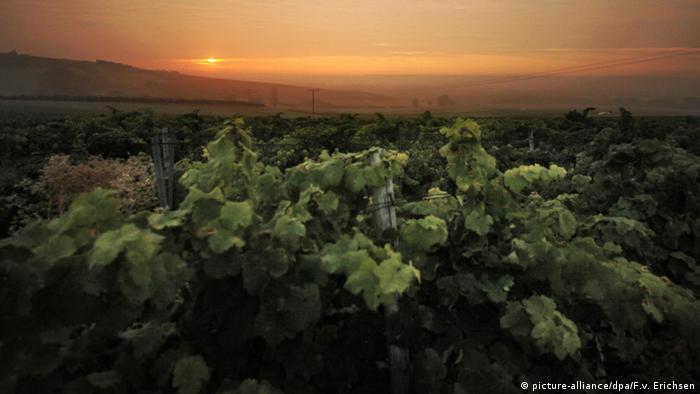 Bildergalerie Weinlandschaften in Deutschland - Rheinland-Pfalz