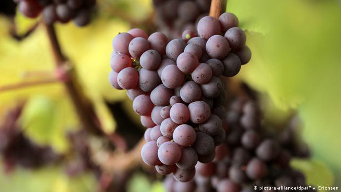 Weinlandschaften in Deutschland