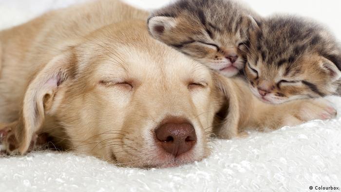 Welpen und Kätzchen (Colourbox)