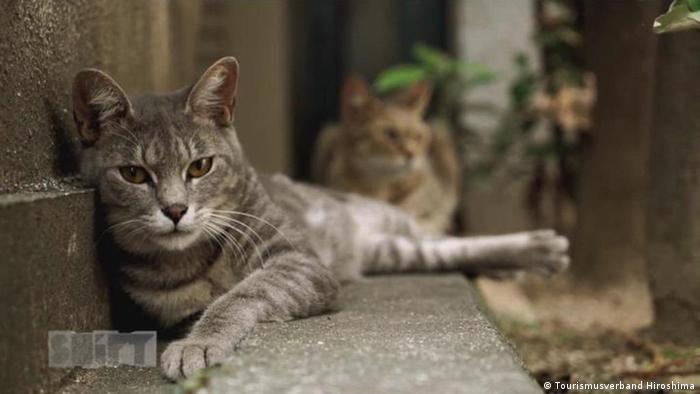 A cat in Japan