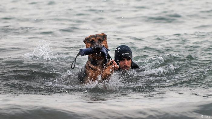 A tracker dog in the water