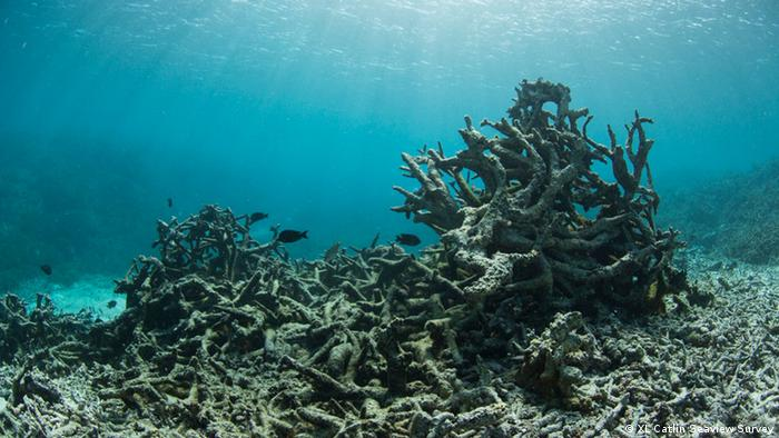 Pictures of bleached coral reef (Copyright: XL Catlin Seaview Survey)
