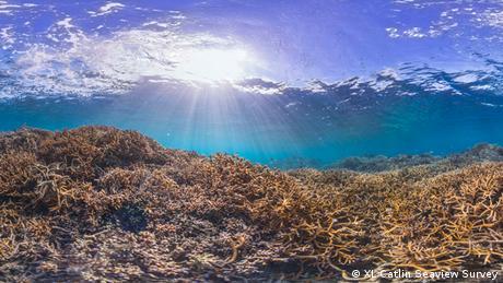 Airport Reef in American Samoa. XL Catlin Seaview Survey.