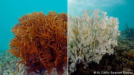 Coral bleaching, photographed by the XL Catlin Seaview Survey