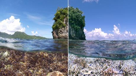 Coral bleaching in American Samoa. XL Catlin Seaview Survey.