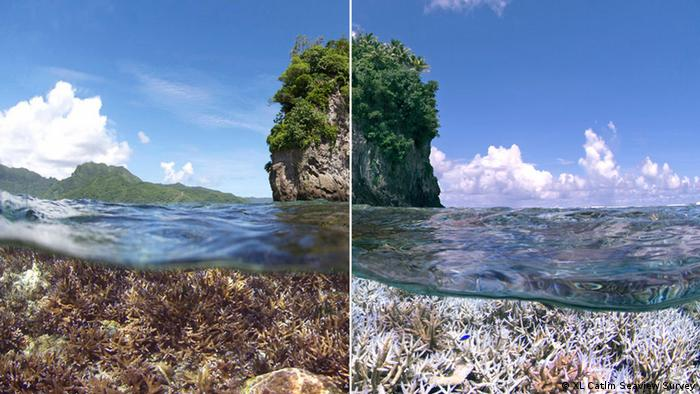 A before and after image of a coral bleaching event in American Samoa. (XL Catlin Seaview Survey)
