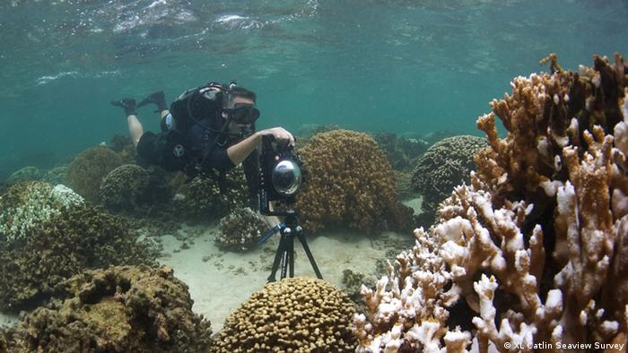 Photographing bleached coral in Kaneohe Bay, Hawaii in October 2014 for Google Street View. XL Catlin Seaview Survey.
