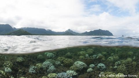 Coral bleaching in Kaneohe Bay in Hawaii. XL Catlin Seaview Survey.