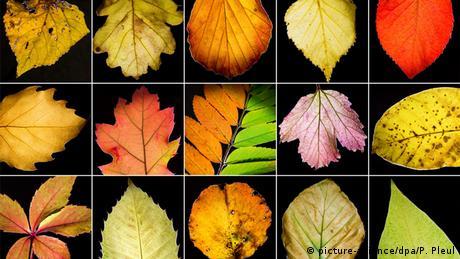 BdT Herbstfarben