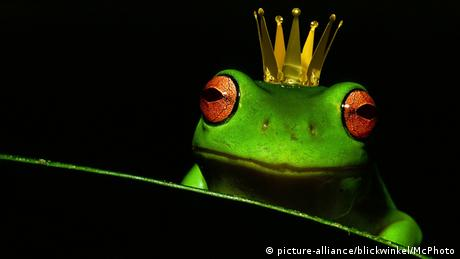 Frog prince (picture-alliance/blickwinkel/McPhoto)