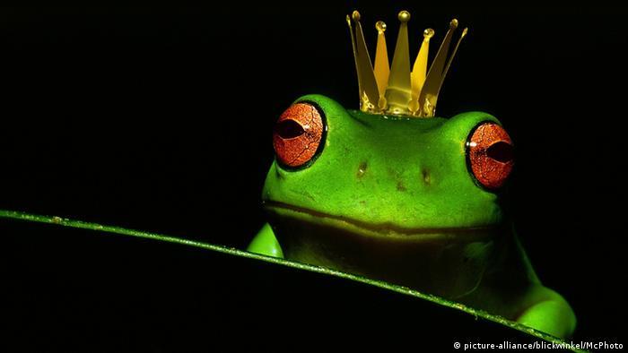 Sapo com coroa de rei