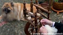 BdT Pullover aus Hundewolle Wallenhorst Niedersachsen Spinnrad Wolle spinnen