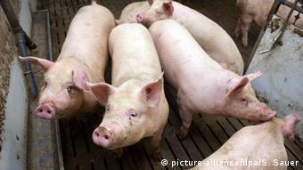 Deutschland Mastbetrieb in Zemmin - Schweinefleisch