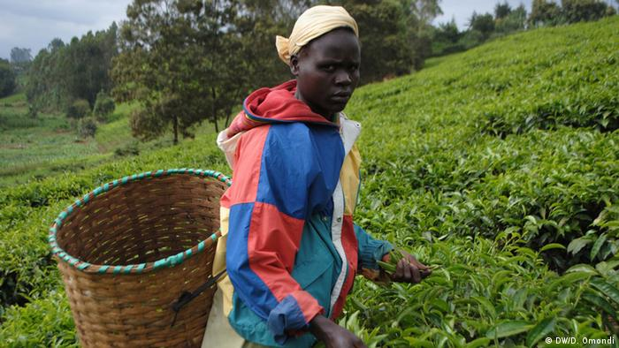 Alice Muthoni in tea fields of central Kenya with basket on back (Photo: Diana Omondi)