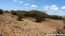 """Your name: Andrew Wasike Country: Kenya Email: andrewrossk@gmail.com Description of photo: 0790 Title:Arid Turkana Keywords: Turkana,Drought, Drought, climate Photographer/source: Andrew Wasike When was the photo taken: 23/10/2015 Where was the photo taken: Turkana Caption: Increase in temperature has caused erratic weather in Kenya's Northern region, farmers are not able to plant anything, animals die, residents are forced to live on food aid. Declaration: """"I hereby declare that I took this photograph and am giving DW the right to use it online, including social media. In case the picture was taken by a third party, I do hold the rights to this image and DW is entitled to use it online and in social media."""""""