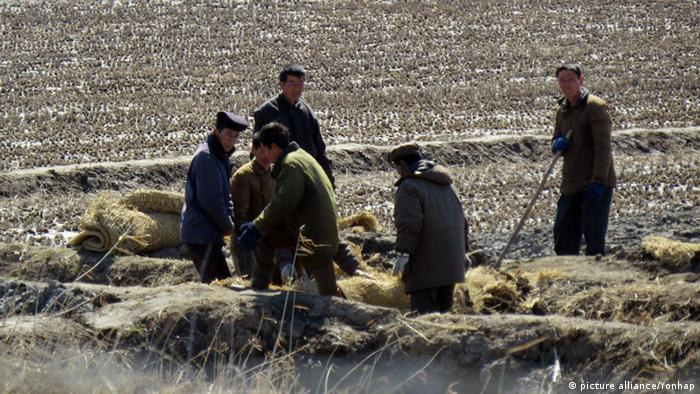 North Koreans working on fields (photo: picture alliance/ Yonhap)