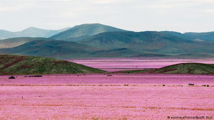 Chile Atacama Wüste Bumen