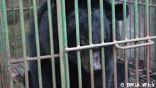Ein Kragenbär vor seiner Rettung aus einer Gallenfarm durch die Tierschutzorganisation Animals Asia, in der Provinz Quang Ninh, Vietnam. *** DW, Anemi Wick, 22.10.2015