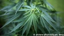 Symbolbild Cannabis und Schmerztherapie in Deutschland