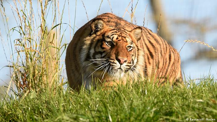 BdW Global Ideas Bild der Woche KW 45/2015 Tiger Wales