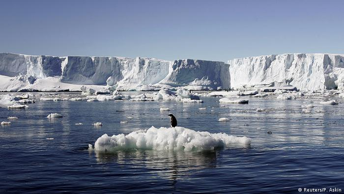 Penguins on ice, Antarctic